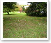 Braxton Lee Cemetery